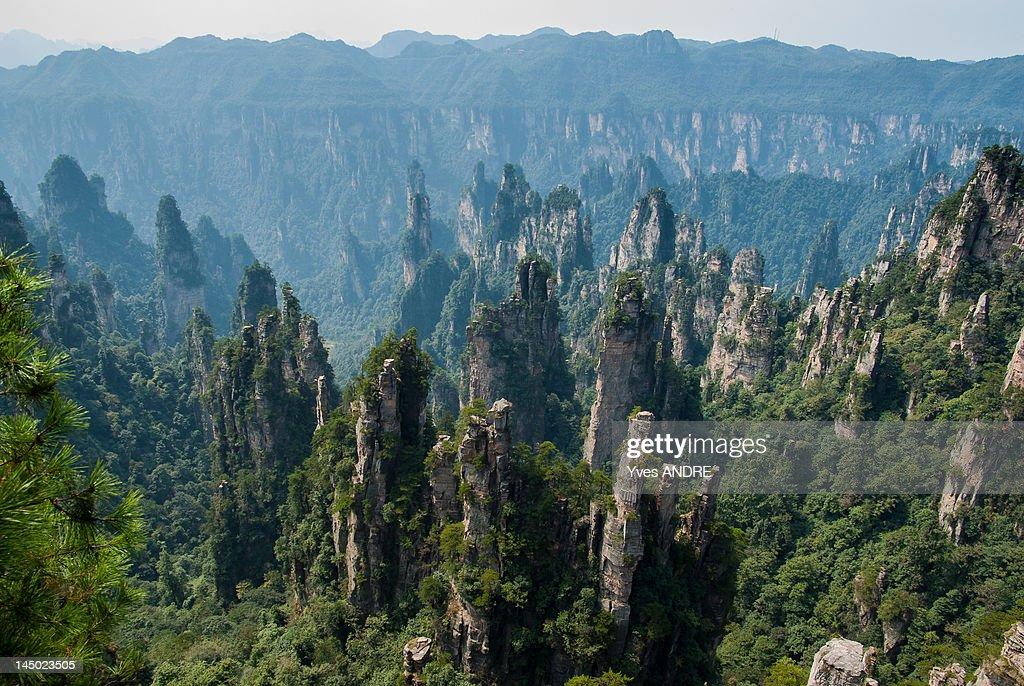 Zhangjiajie Forest National Park : Stock Photo