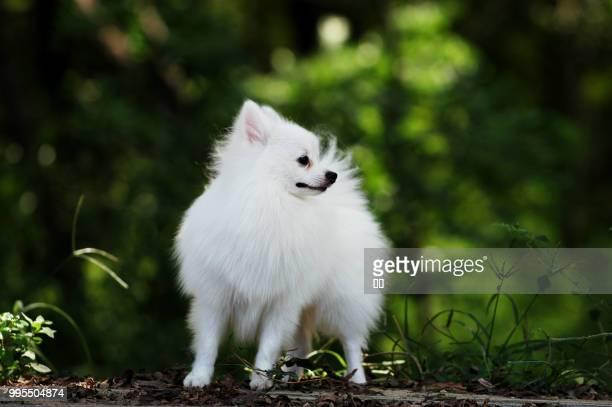zhengzhou,china - east asia - marderhund stock-fotos und bilder