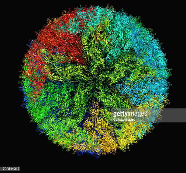 zika virus virion capsid molecular model - biomedical illustration stock pictures, royalty-free photos & images