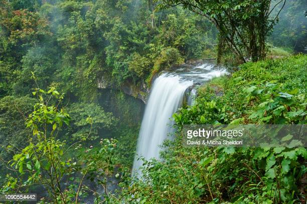 zillie falls in the rainforest, queensland - atherton tableland stock pictures, royalty-free photos & images