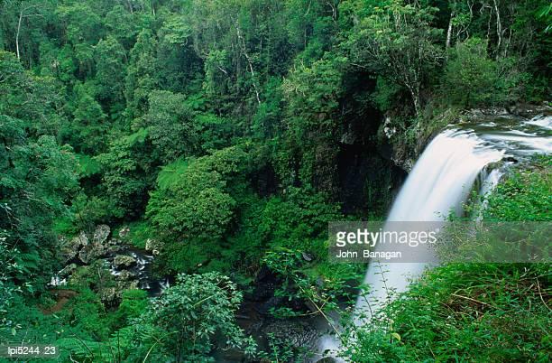 zillie falls on millaa millaa waterfall c1rcuit, atherton tablelands, australia - atherton tableland stock pictures, royalty-free photos & images