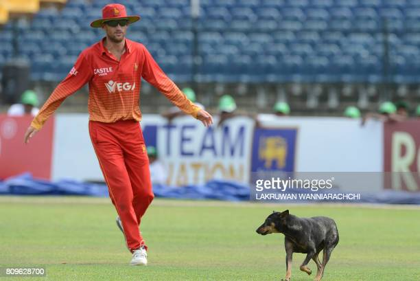 Zimbabwe cricketer Sean Williams looks on as a dog joins him during the third oneday international cricket match between Sri Lanka and Zimbabwe at...