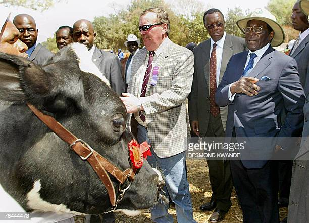 Zimbabwean President Robert Mugabe looks at cows with his counterpart the President of Equatorial Guinea Teodoro Obiang Nguema 31 August 2007 at the...