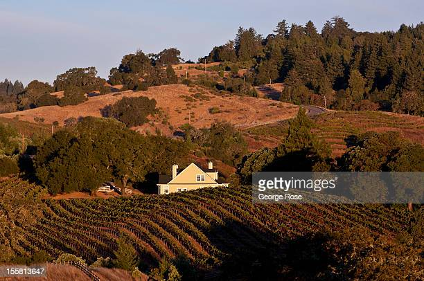 Zinfandel vineyards in the Rockpile Appellation overlooks Lake Sonoma on October 15 near Healdsburg California Warm sunny skies are helping vintners...