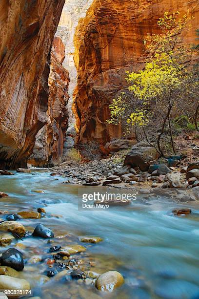 zion narrows, zion national park, utah, usa - rock formation stock pictures, royalty-free photos & images