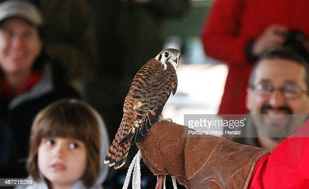 Zoe Pateakos of Marion Mass at left in background keeps an eye on an American Kestrel named Crecelle during a live birds of prey presentation at...