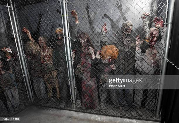 Zombie mannequins are shown at the Fear the Walking Dead Survival attraction's grand opening at the Fremont Street Experience on August 29 2017 in...