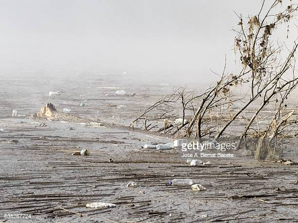 Zone flooded by the overflow of a river with branches and garbage floating
