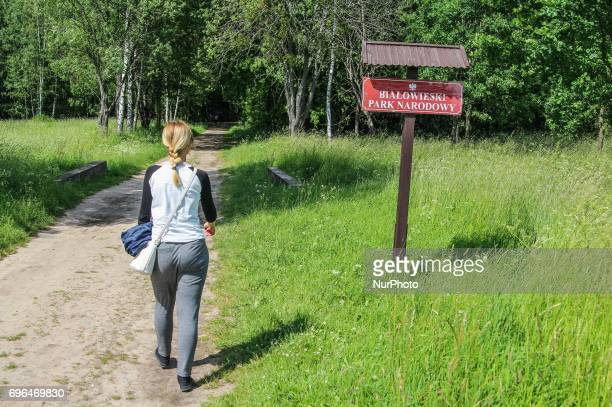 Zone of Bialowieza Forest Biosphere Reserve is seen in Bialoweza, Poland on 15 June 2017 Bialowieza Forest is one of the last and largest remaining...