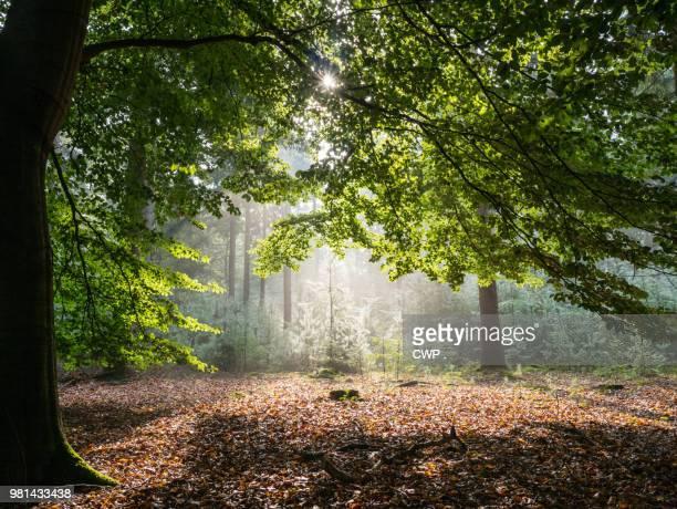 Zonlicht door de bladeren in het bos