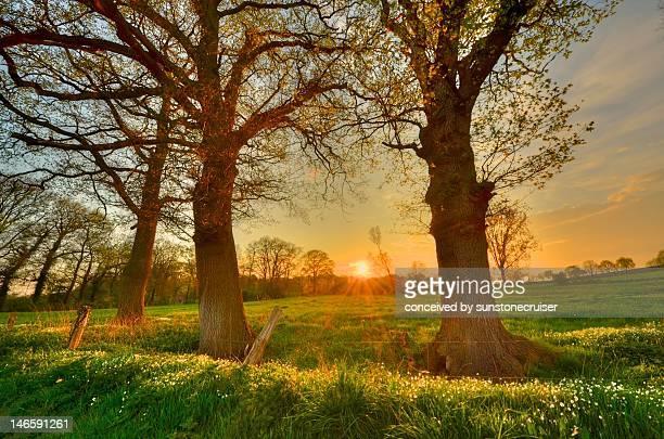 zonsondergang tussen twee eiken - zonsondergang stock pictures, royalty-free photos & images
