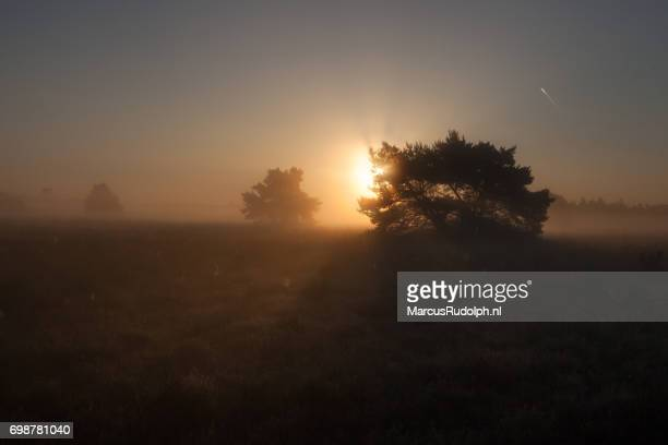 zonsopgang boven elspeetse hei - zonsopgang stock pictures, royalty-free photos & images