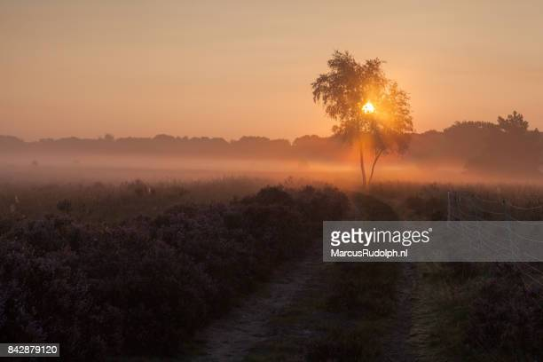 zonsopgang op de hei - zonsopgang stock pictures, royalty-free photos & images