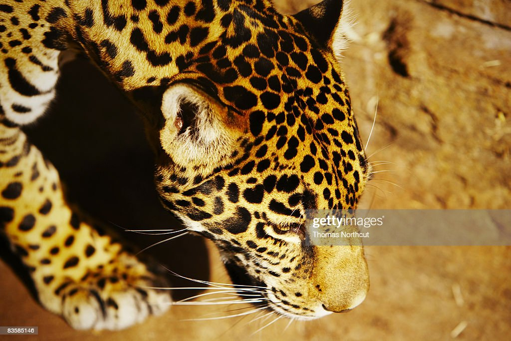 zoo animals : Stock Photo