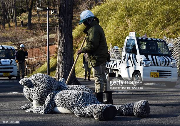 A zoo employee checks the effectiveness of a 'tranquilizer' on an employee wearing a snow leopard suit during a drill to practice what to do in the...