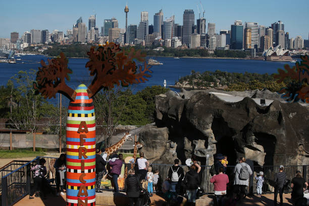 AUS: Taronga Zoo Reopens To Public As Coronavirus Restrictions Ease