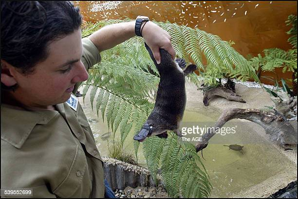 Zoo keeper Adrian Mifsud and Millsom the platypus in the new platypus enclosure today at Healesville Sanctuary on 12th May 2005 THE AGE NEWS Picture...