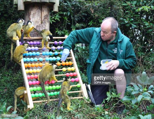 Zoo keeper at ZSL London Zoo seen counting Squirrel Monkeys during the Zoo's annual stocktaking Caring for more than 700 different species ZSL London...