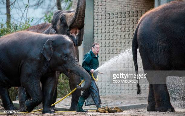 A zoo keeper cleans elephants in their enclosure at the Berlin Zoo on January 1 2018 Tourists and locals flocked to the zoo in the German capital on...