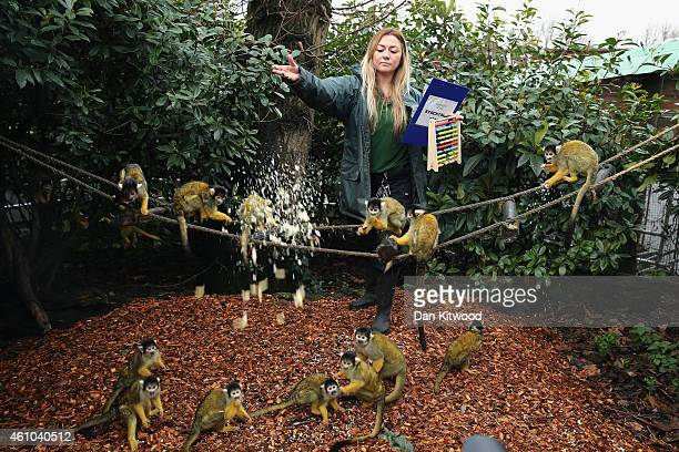 Zoo Keeper feeds the Bolivian Squirrel Monkeys during the ZSL London Zoo's annual stocktake of animals on January 5 2015 in London England The zoo's...