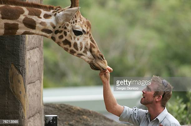 Zoo keeper feeds the newest member of Taronga's Giraffe herd 'Jimiyu' during her arrival at Sydney's Taronga Zoo on August 22, 2007 in Sydney,...