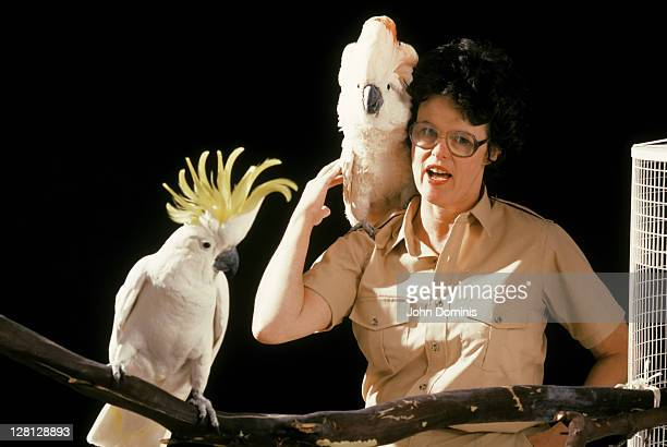 zoo keeper holding a cockatoo - cockatiel stock pictures, royalty-free photos & images