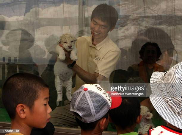 A zoo keeper holds a young lioness cub to show childres during their first public viewing at Himeji Central Park on July 13 2013 in Himeji Japan The...