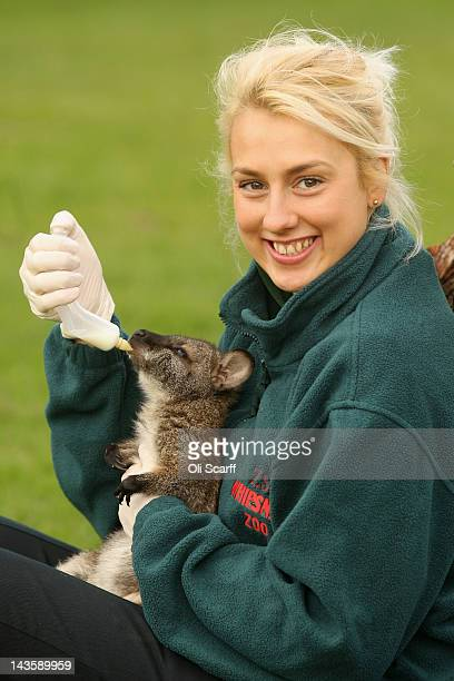 Zoo keeper Jo Shirley feeds Tilly an orphaned baby wallaby with milk at ZSL Whipsnade Zoo on April 30 2012 in Dunstable England Tilly is being...