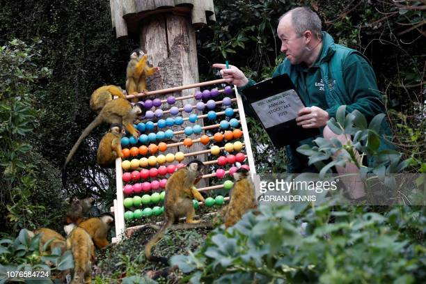 TOPSHOT A zoo keeper poses with squirrel monkeys during a photocall for the annual stock take at the ZSL London Zoo in central London on January 3...