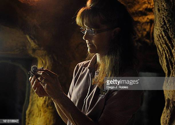 Zoo keeper Sue Krauss inspects a baby fruitbat she found on the floor of the bat cave exhibit on Tuesday morning Aug 10 in the Denver Zoo After...