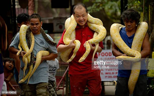 Zoo owner Manny Tangco carries albino Burmese pythons at the Malabon Zoo in Manila on March 3 as the world celebrates 3rd World Wildlife Day The day...