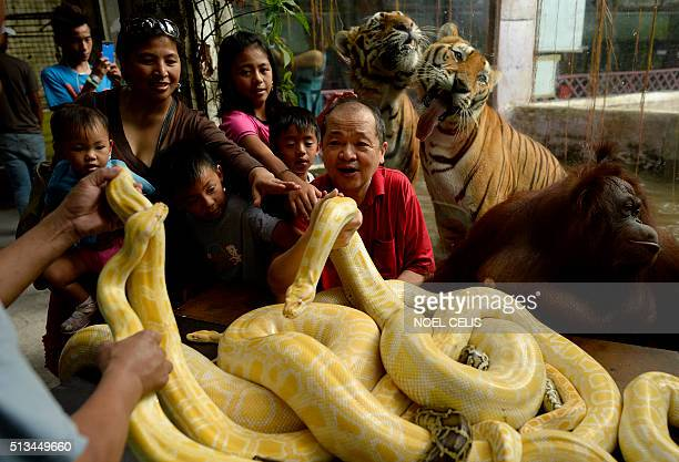 Zoo owner Manny Tangco shows albino Burmese pythons to visitors at the Malabon Zoo in Manila on March 3 as the world celebrates 3rd World Wildlife...