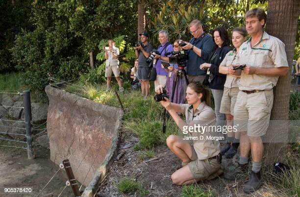 Zoo staff watch the celebrations for Mali's eight birthday at Melbourne Zoo on January 16 2018 in Melbourne Australia Mali was born on January 16 the...