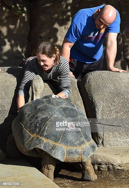 Zoo visitors play with a giant Galápagos tortoise named 'Grandma' who is estimated between 120 to 140 years old inside its enclosure at the San Diego...