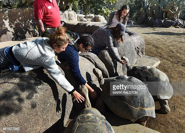 Zoo visitors play with giant Galápagos tortoises that are estimated between 120 to 140 years old inside their enclosure at the San Diego Zoo...