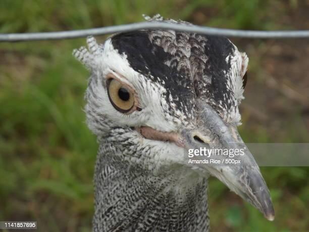 zoobird - amanda and amanda stock pictures, royalty-free photos & images