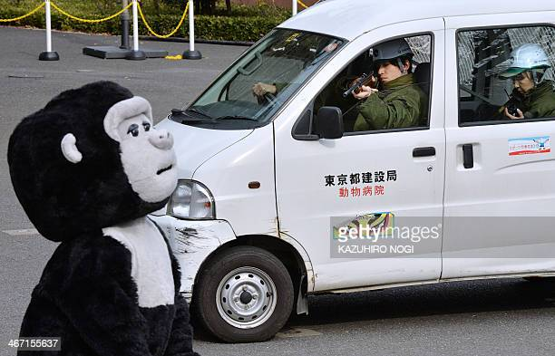A zookeeper aims a tranquilizer gun towards an animal keeper dressed in a gorilla costume during a drill to practice what to do in the event of an...