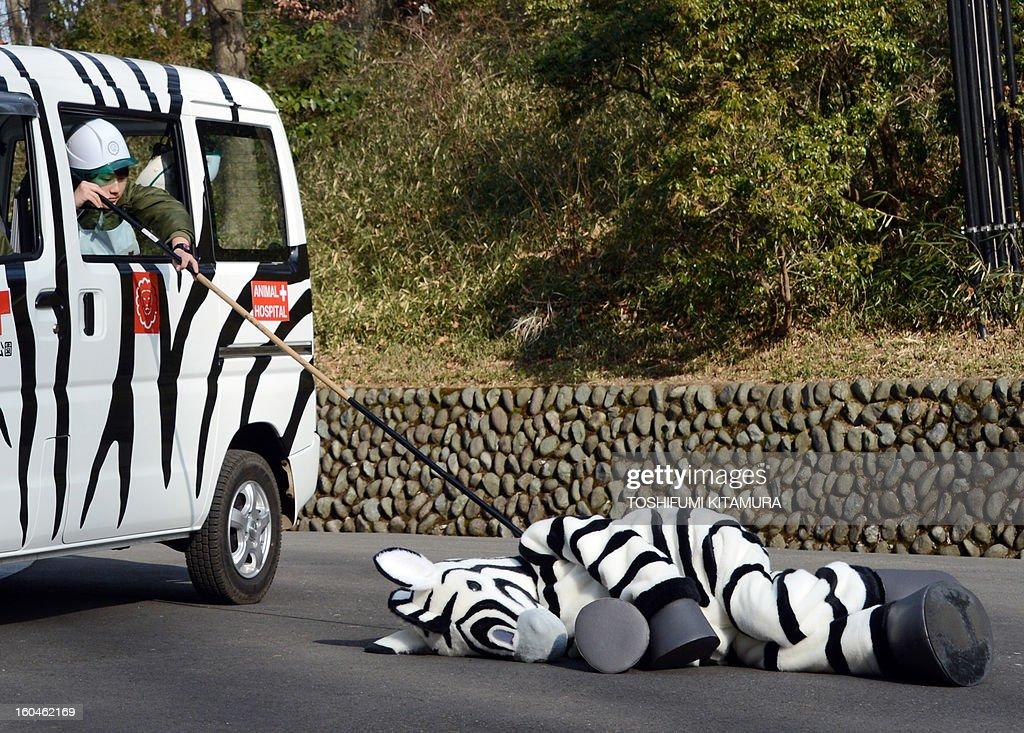 JAPAN-ANIMAL-ZOO-DRILL : News Photo