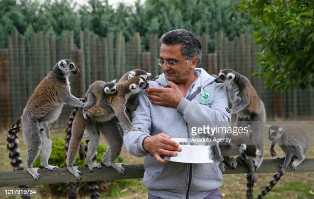 Zookeeper feeds lemurs at Izmir Wildlife Park in Izmir, Turkey on June 6, 2020.