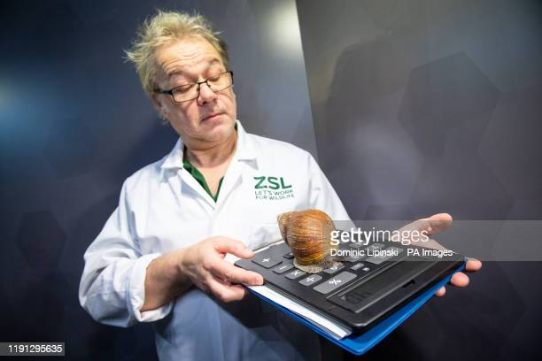 A zookeeper holds an African Giant Land Snail during the annual stocktake at ZSL London Zoo in central London