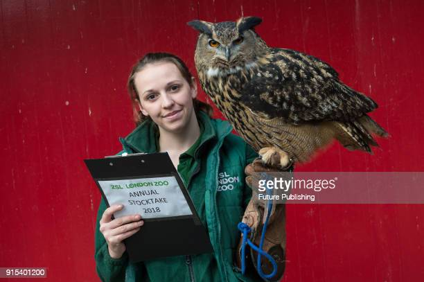Zookeeper holds the eagle owl during the annual stocktake at ZSL London Zoo. Each year keepers tally up every animal of more than 700 species at the...