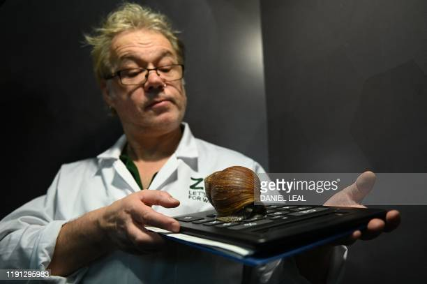 A zookeeper holds up a Giant African land snail during the annual stocktake at ZSL London Zoo in central London on January 2 2020