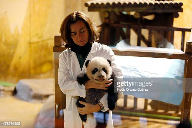 Zookeeper Maria Delclaux holds the panda cub Xing Bao 'Treasury of Star' during an event to announce its name at the Zoo Aquarium in Madrid. Xing Bao...