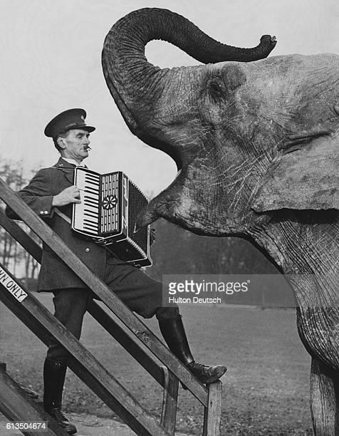 Zookeeper Plays Accordion to Elephant