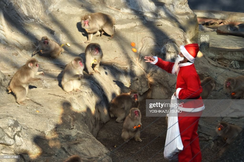 A zookeeper wearing a Santa Claus costume feeds fruit and vegetables to Japanese macaques at Tokyo's Ueno Zoo on December 24, 2014. The event was part of an annual 'Christmas gifts' attraction. AFP PHOTO / Yoshikazu TSUNO