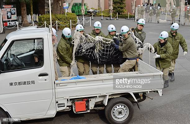 Zookeepers carry an animal keeper dressed in a gorilla costume during a drill to practice what to do in the event of an animal escape at the Ueno zoo...