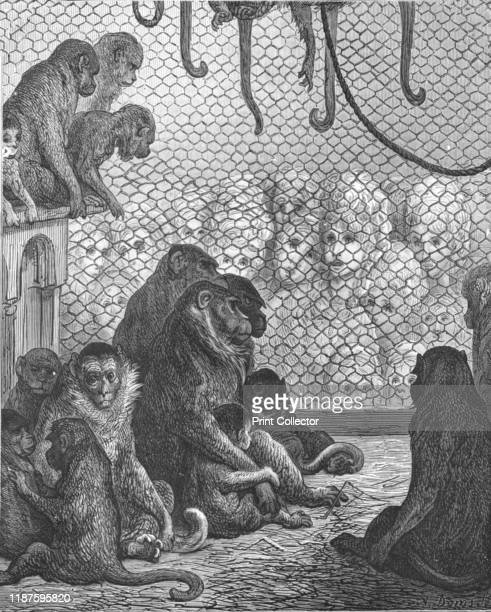 Zoological GardensThe Monkey House' 1872 Visitors to London zoo watch monkeys in an enclosure completed in 1864 From LONDON A Pilgrimage by Gustave...