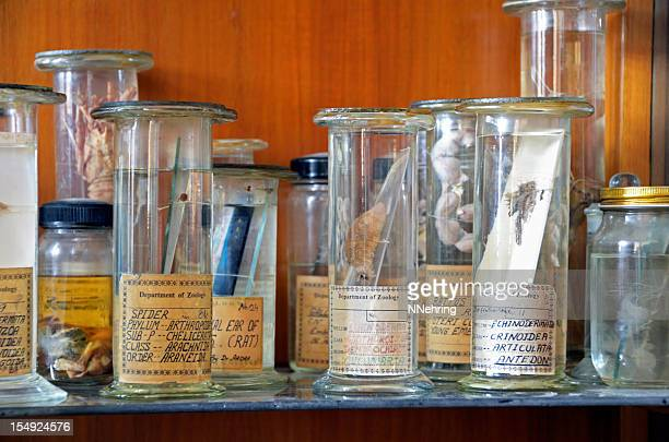 zoology specimens in collection jars