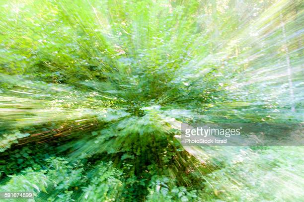 Zoom affect of a Dense Alpine forest