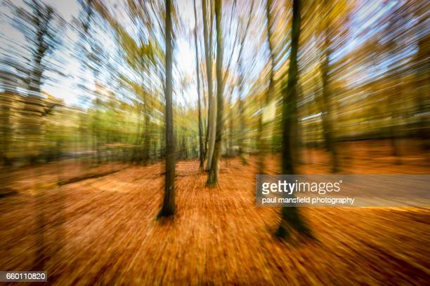 zoomed image of forest - zoom in stock photos and pictures